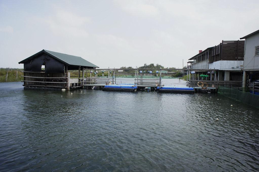 東石鄉向禾休閒漁場 (10)
