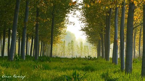 primavera alberi fiume mantova po colori lombardia revere pioppi pianura padana blinkagain