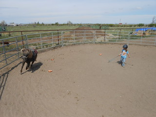 Horse Lessons 5-17-13 (8)
