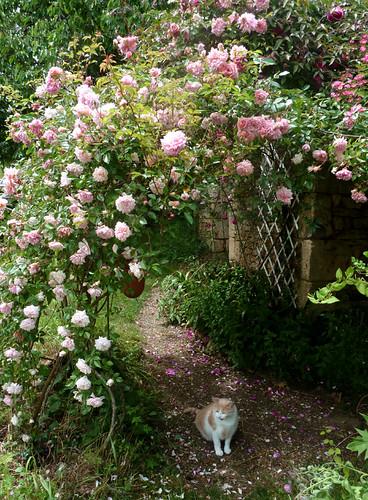 tous ces rosiers que l'on aime - floraisons 9033996547_553f102c67