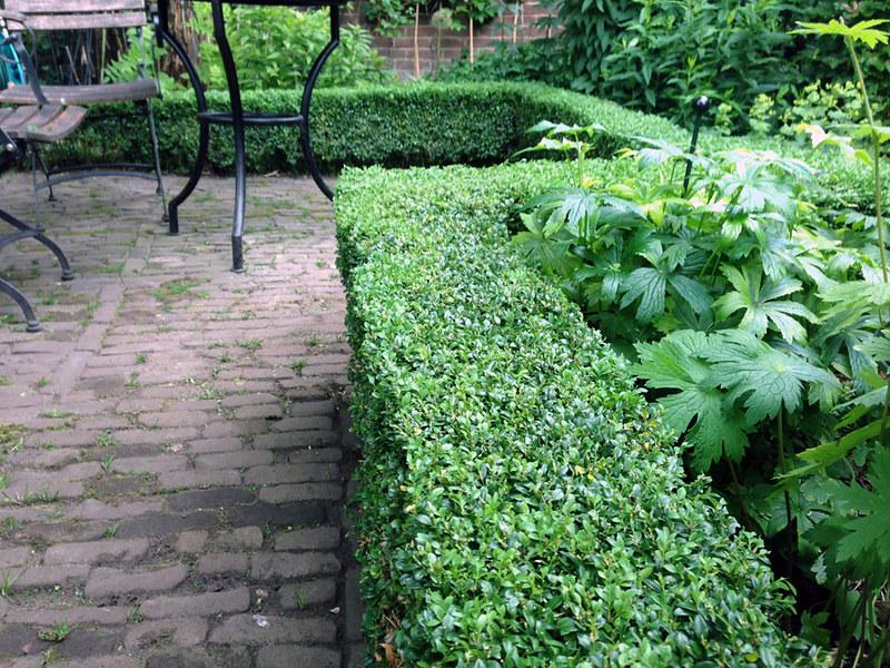 Buxushaagje omzoomt terrasje