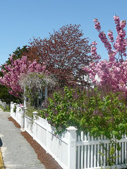 Spring on Commercial Street - Provincetown MA, Cape Cod
