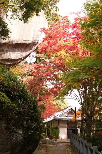 【写真】2012 紅葉 : 笠置山もみじ公園/2020-05-28/IMGP6123