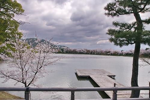 【写真】2013 桜 : 大覚寺/2020-09-15/IMGP9413