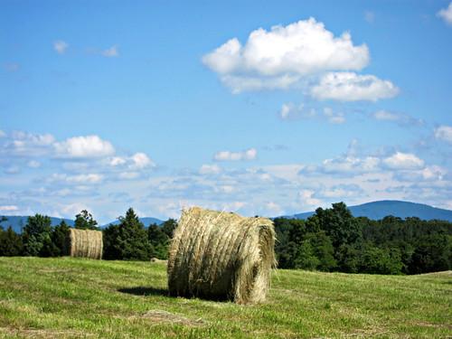 mountain field virginia farm va haystack hay middletown shenandoah bale massanuttenmountain