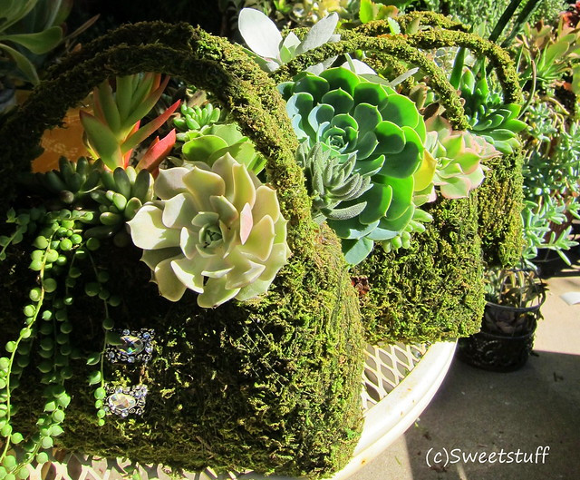 Succulent purses