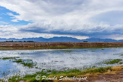 arizona clouds reflections stormclouds waterpuddles pamelaschreckengost pamschreckcom ©2013pamelaschreckengost weltonarizona