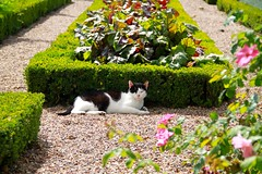 The chateau cat