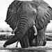 Singita Kruger - Sweni by adriansteirn