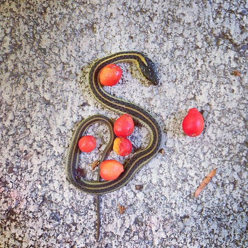 S is for serpent. R is for rosehips.