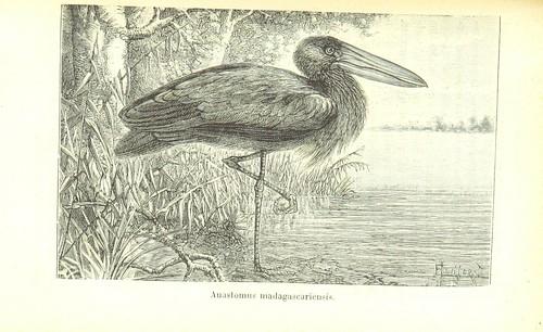 Image taken from page 355 of 'Madagascar depuis sa de?couverte jusqu'a? nos jours ... Ouvrage orne? de ... gravures, etc'