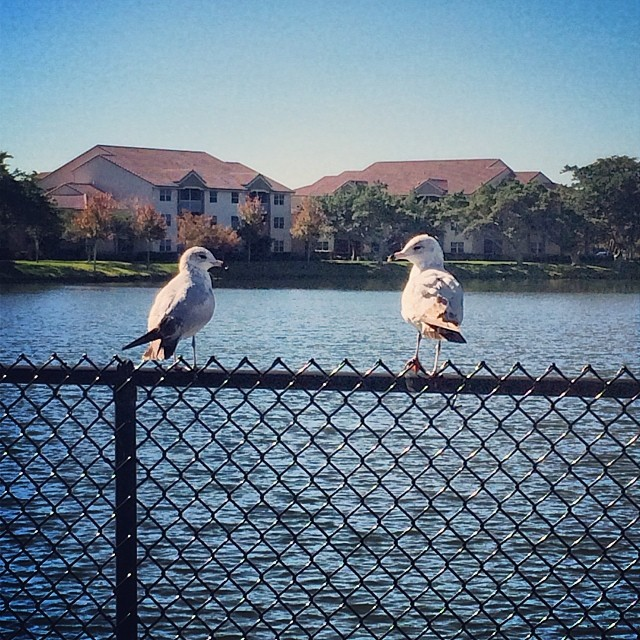 #birds at the #park during my morning #walk. #nature #southflorida #wellebypark #igersftl
