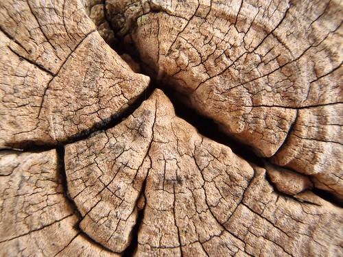 Tree wood, Olive Oil Wood Inner