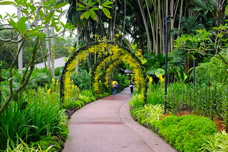 Come close to nature at the Singapore Botanic Gardens - Things to do in Singapore