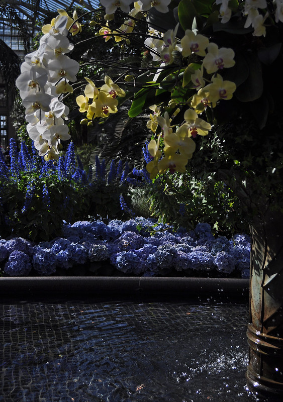 East Conservatory with Bismarckia, Plectranthus, Orchids and Hydrangea (2)