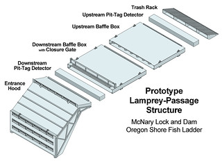 Prototype Lamprey-Passage Structure