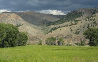 Green meadow*