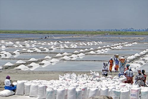 india salt production tamilnadu inde saltpans salines marakkanam dalbera