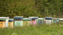 ruches bretonnes / breton painted wooden beehives