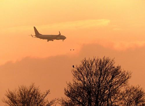 sunset birds plane