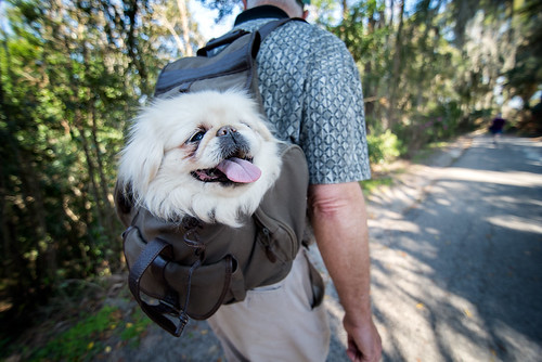Chyna goes Backpacking