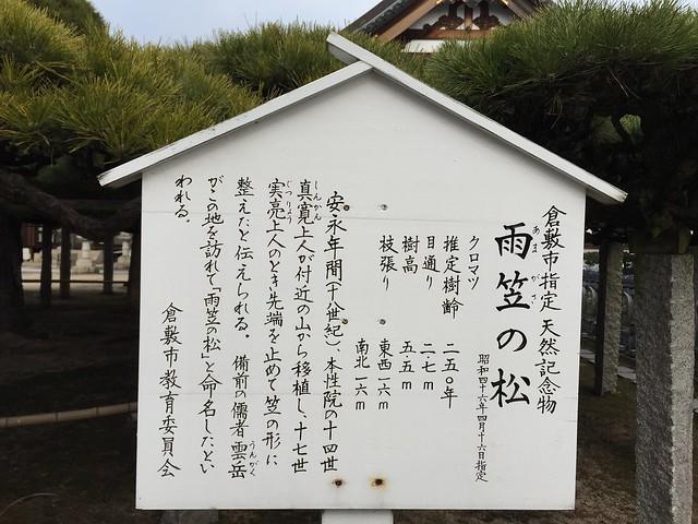 雨笠松 #3