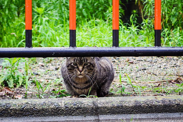 Today's Cat@2016-06-17