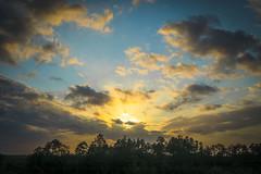 Georgia Sunset and Treeline