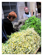 Parada de venta de hiervas frescas