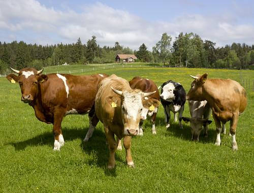 A Rural Scene by Steffe