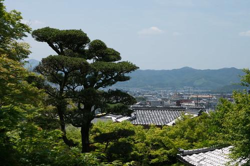 【写真】青葉 : 金福寺
