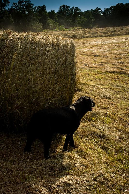 Hay Favorites (6 of 7)