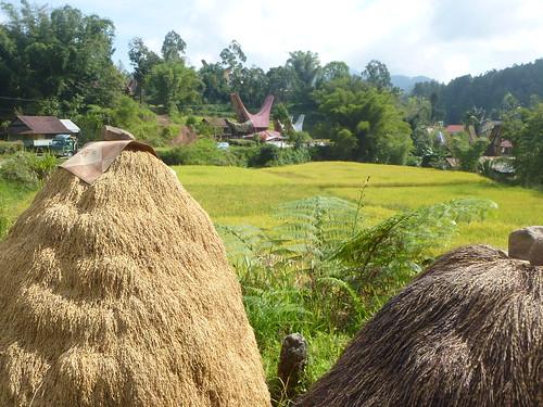 Sulawesi13-Palopo-Rantepao (9)