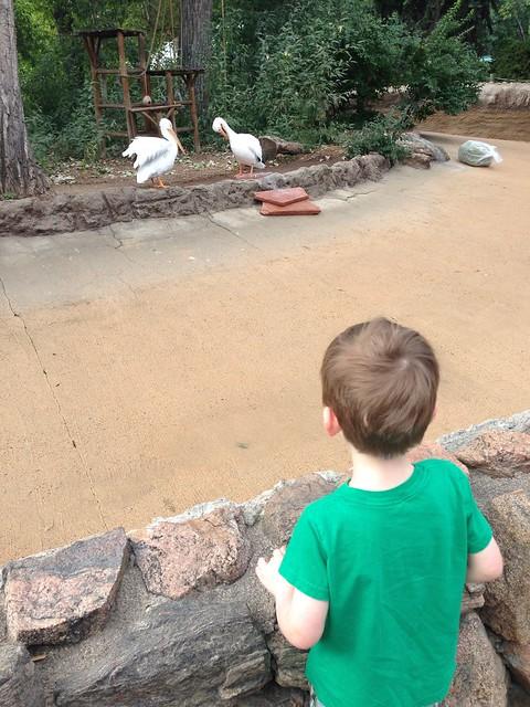 Denver zoo at 39 1/2 weeks