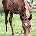 Horse_Baby by art.salilsharma