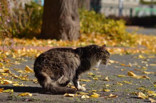 cats_2013-12-14_3