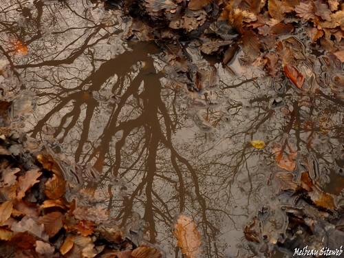 D'arbres en branches est la forêt