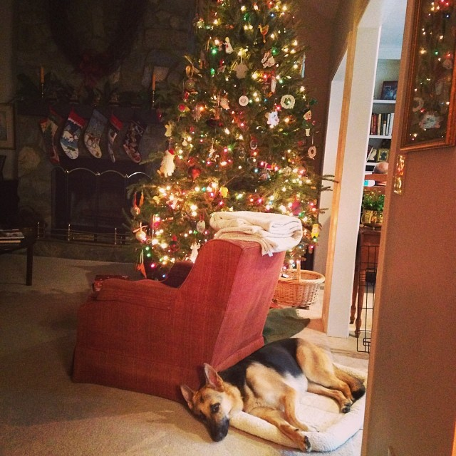 Christmas shepherd is all tuckered out.