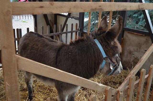 Weihnachtsmarkt Freinsheim donkey