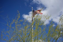 US flag in blue sky with clouds, behind palo verde