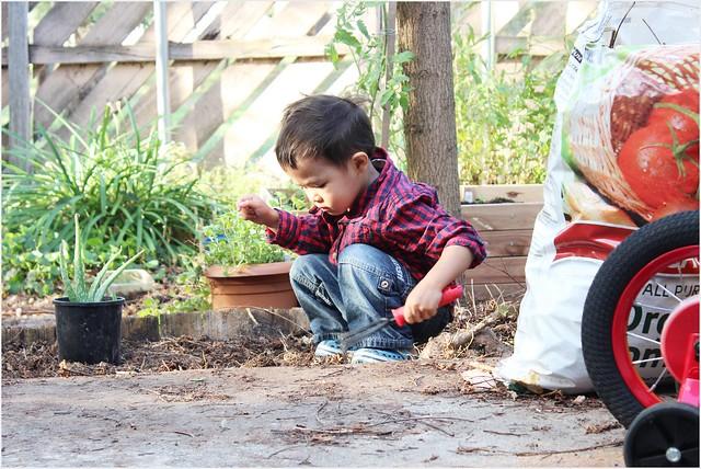 asyraf gardening