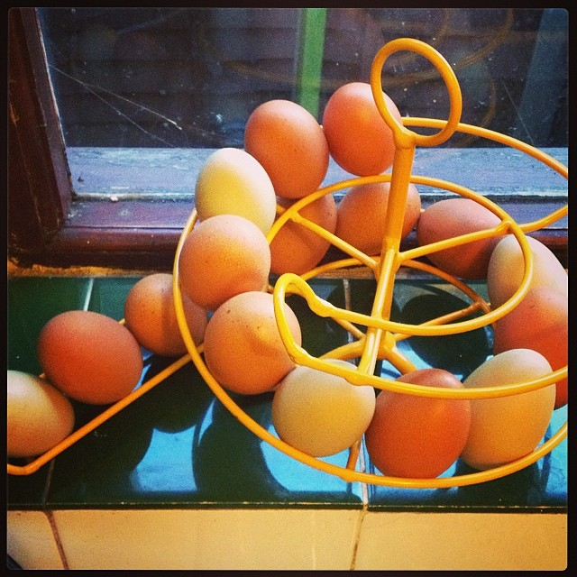A spiral of eggs on the kitchen windowsill. We end today with 17, and 3 more are laid each day #cake #omelettes #morecake #scrambles #yum