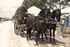 Horses - Combined Driving Event, Carolina Horse Park