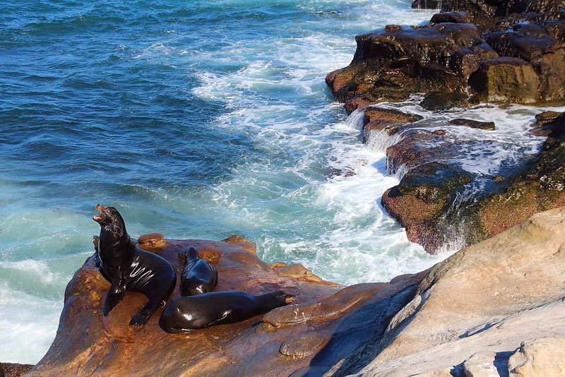 IMG_2125 California Sea Lion