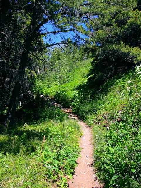IMG_3280 Apikuni Falls Trail