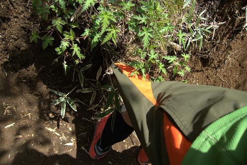 パンツに木が刺さった