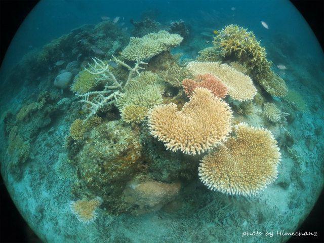 名蔵湾のサンゴはどこもキレイ!!!