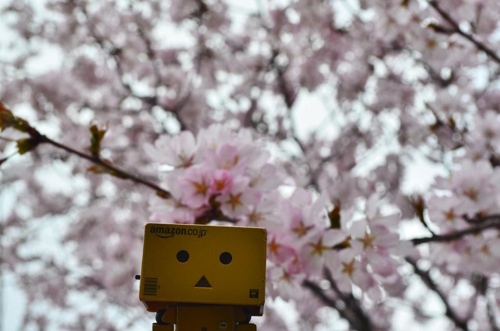 お花見ダンボー。 (3)