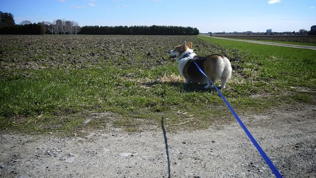 Walking the Farm 2