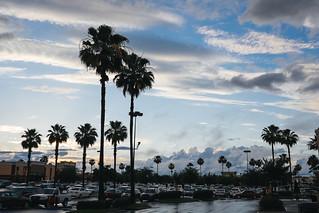 135/365 - Florida after a rain shower